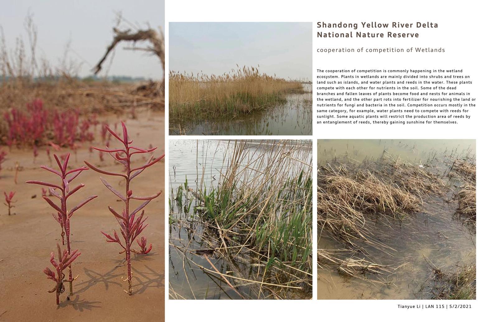 Shandong Yellow River Delta National Nature Reserve 6