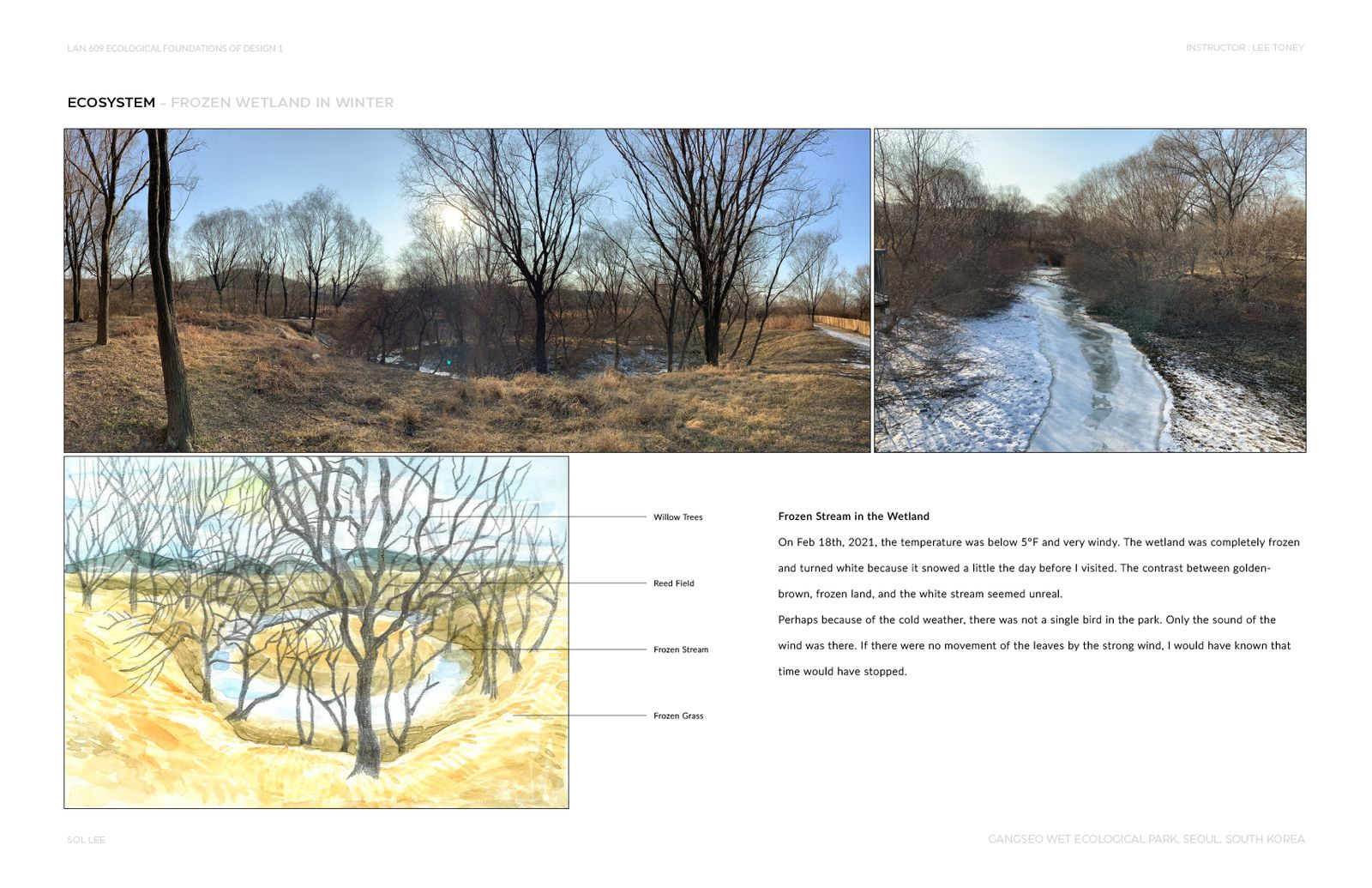 Gangseo Wet Ecology Park - Ecosystem - Frozen Wetland in Winter