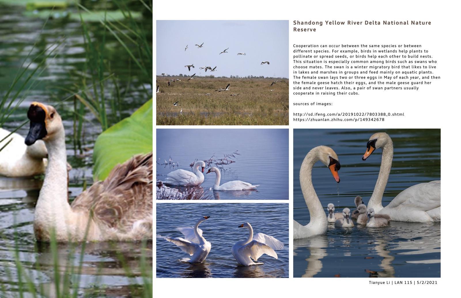 Shandong Yellow River Delta National Nature Reserve 5