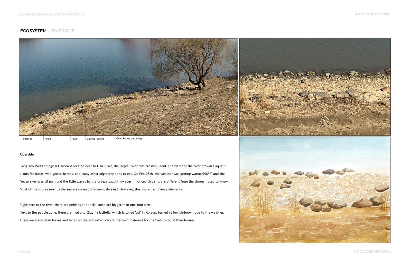 Gangseo Wet Ecology Park - Ecosystem - Riverside