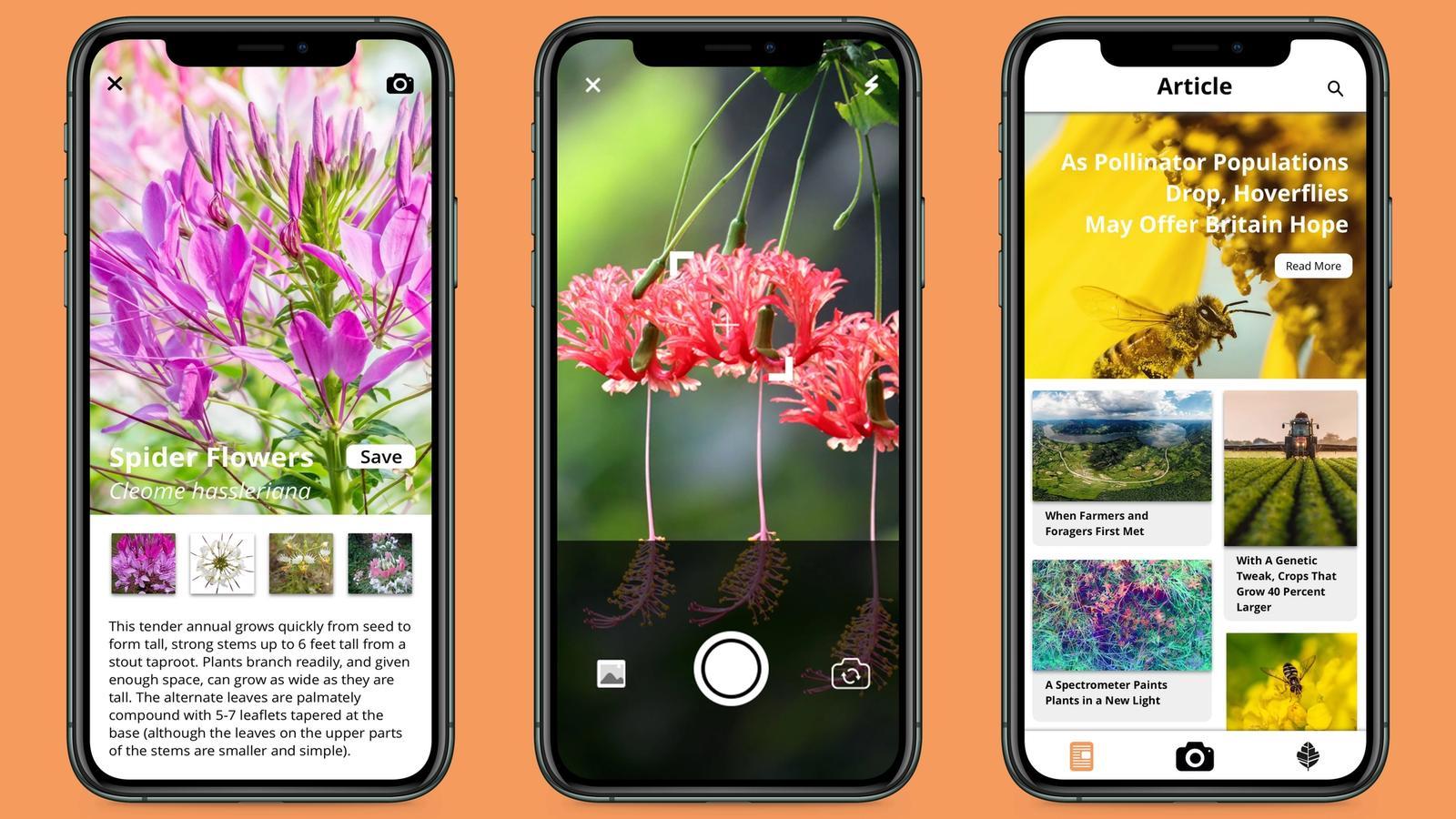 Flora // Mobile Application