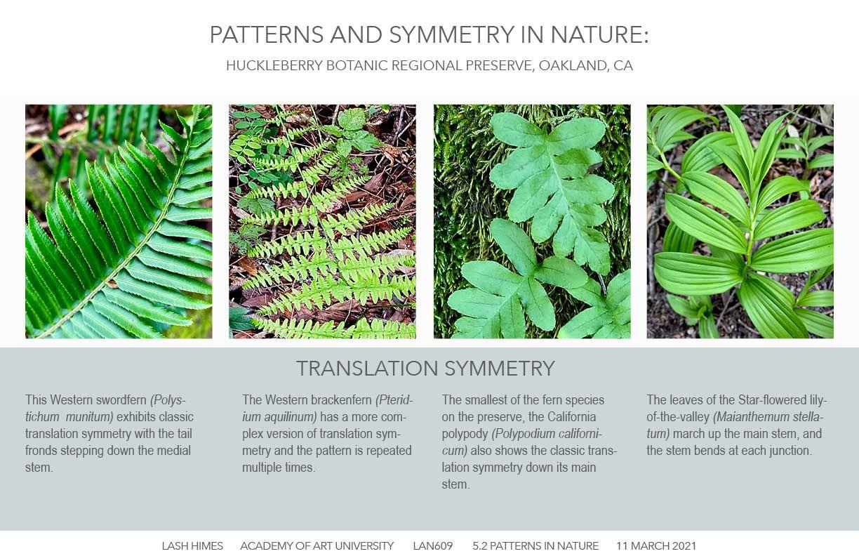 Huckleberry Botanic Regional Preserve - Patterns and Symmetry 3