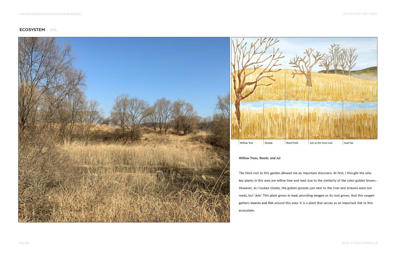 Gangseo Wet Ecology Park - Ecosystem - Jul