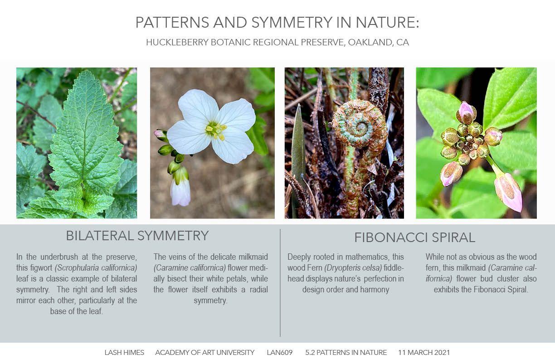 Huckleberry Botanic Regional Preserve - Patterns and Symmetry 1