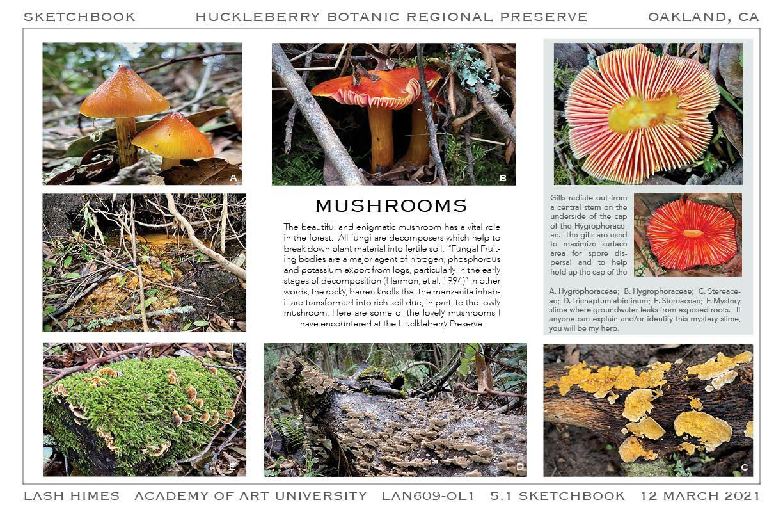 Huckleberry Botanic Regional Preserve - Mushrooms