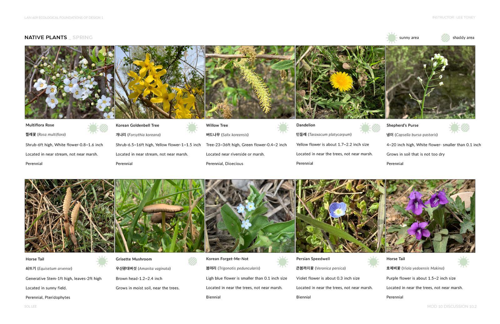 Gangseo Wet Ecology Park - Native Plants - Spring