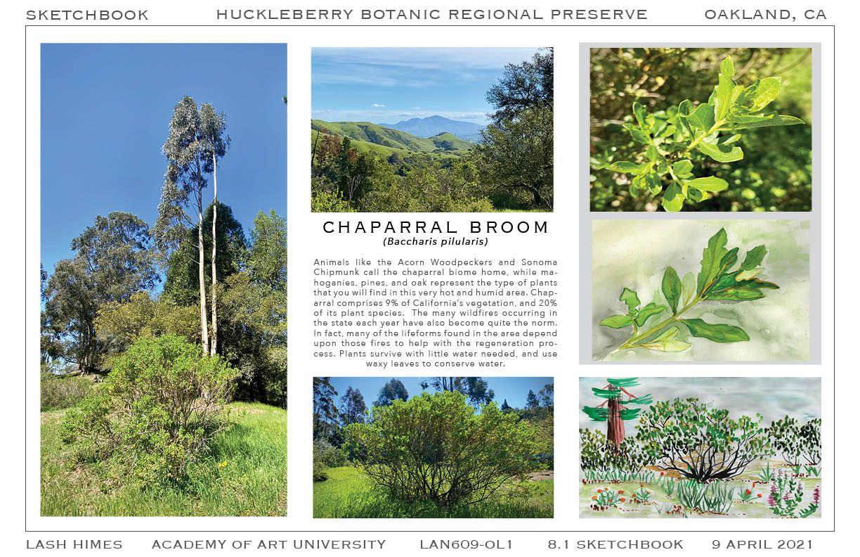 Huckleberry Botanic Regional Preserve - Chaparral Broom