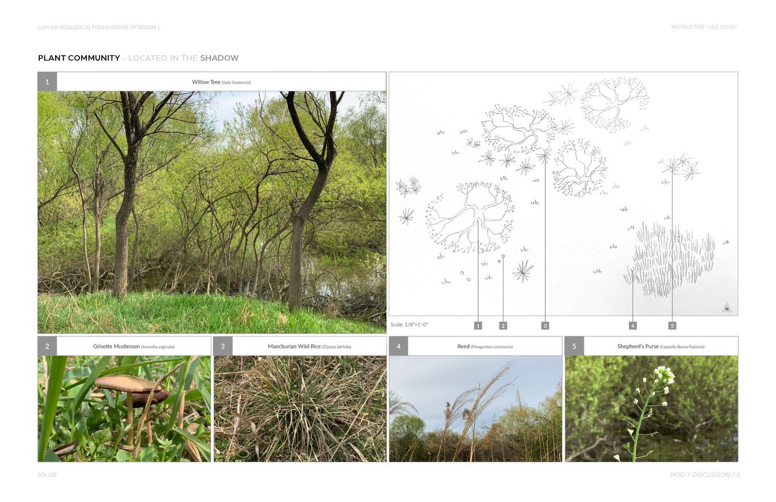 Gangseo Wet Ecology Park - Plant Community - Shadow