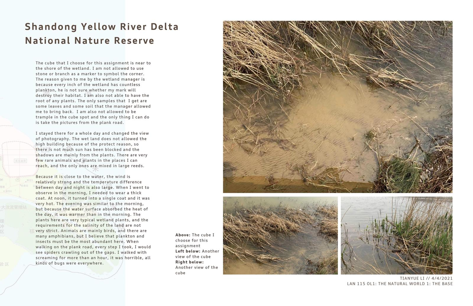 Shandong Yellow River Delta National Nature Reserve 3