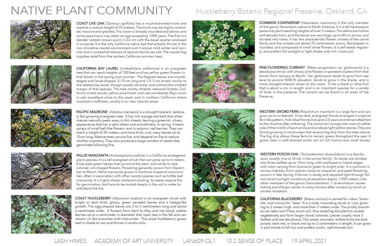 Huckleberry Botanic Regional Preserve - Native Plant Community
