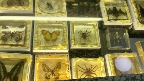 store counter full of butterflys scorpions and spiders under glass