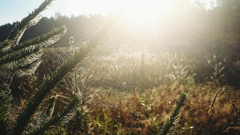 Photo of a spider web in the sun.