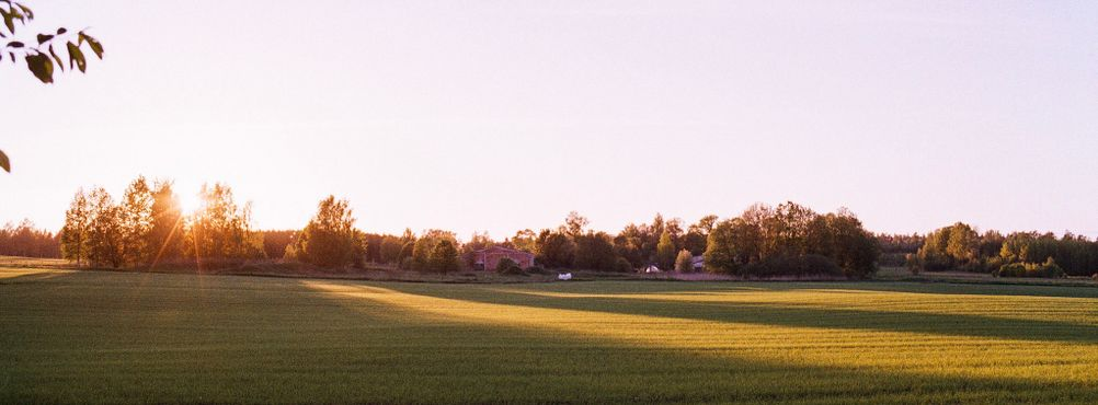 Photo of a sunset on a field.