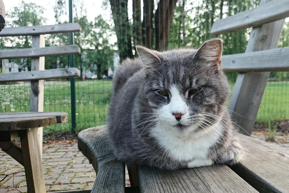 Photo of a cat.
