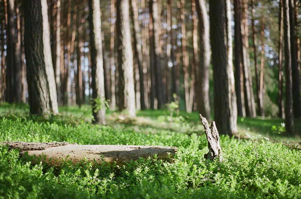 Photo of a fallen tree in forest.
