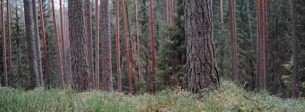 Photography of woods.