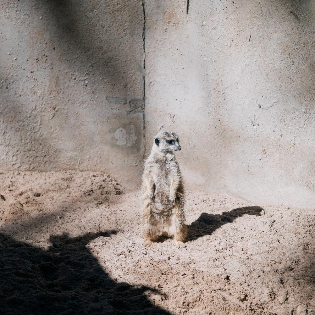 Photo of an animal standing.