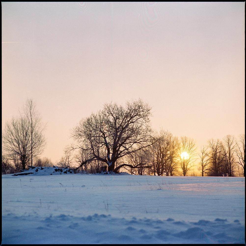 Photo of trees in front of sunrise.