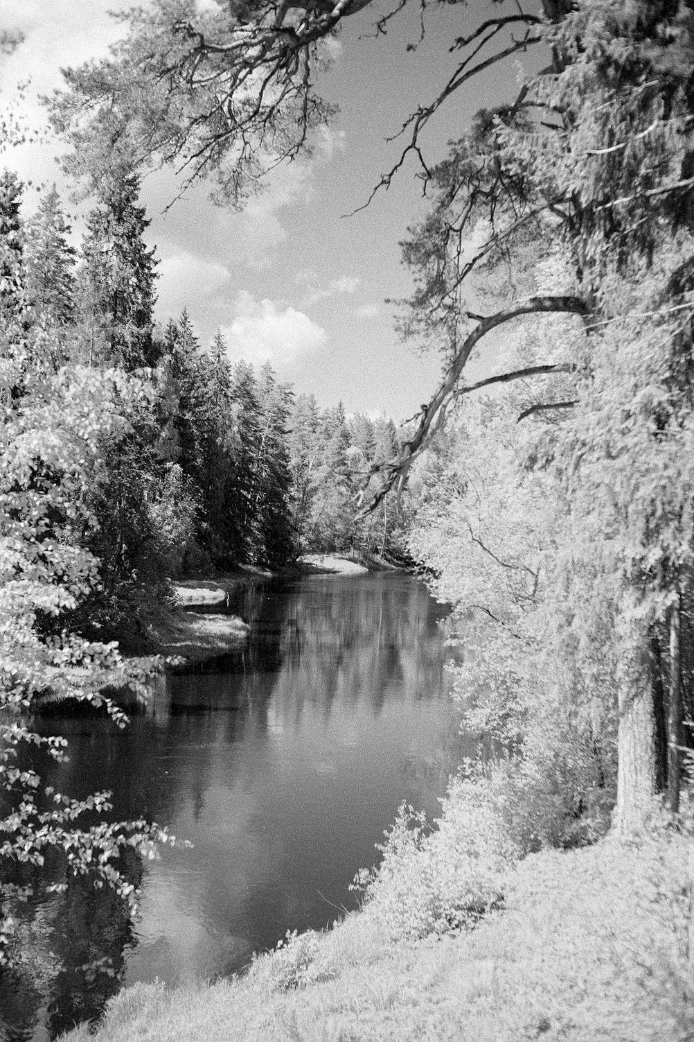 Photo of a river with trees on each side.