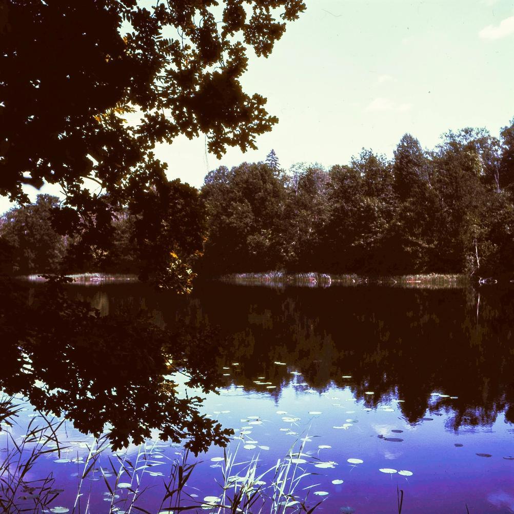 Photo of trees next to lake.