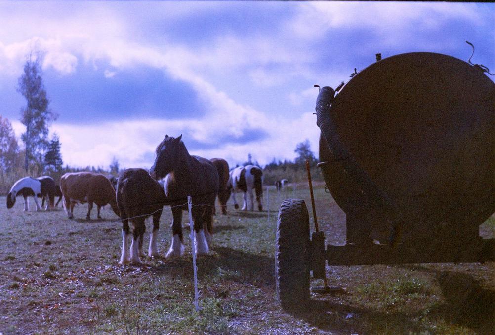 Photo of far animals on expired film.