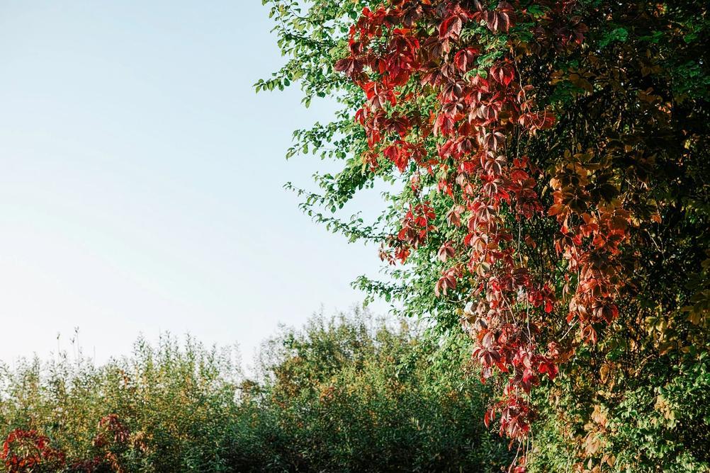 Photo of autimny leaves.