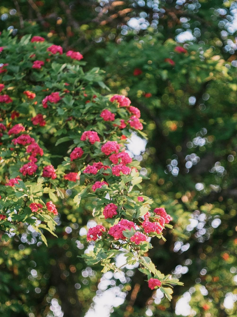 Photo of a blooming tree.