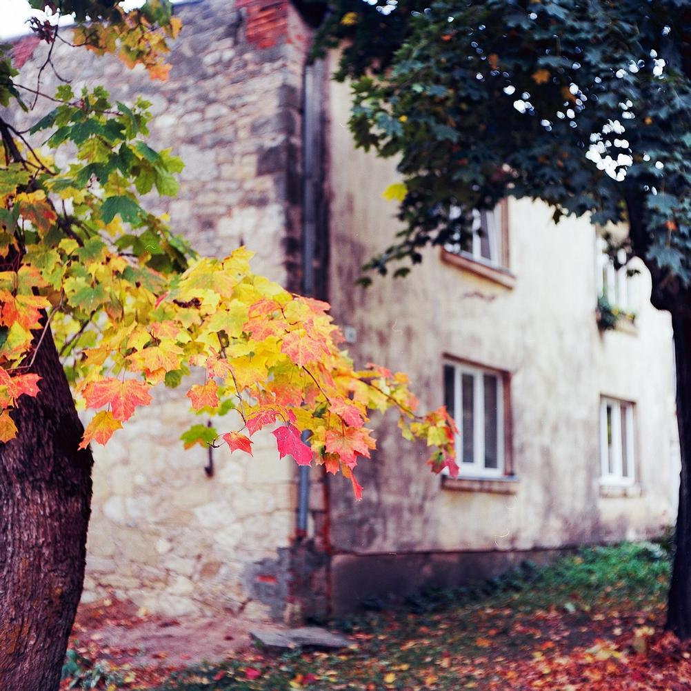 Photo of autumn leaves against a house backdrop.