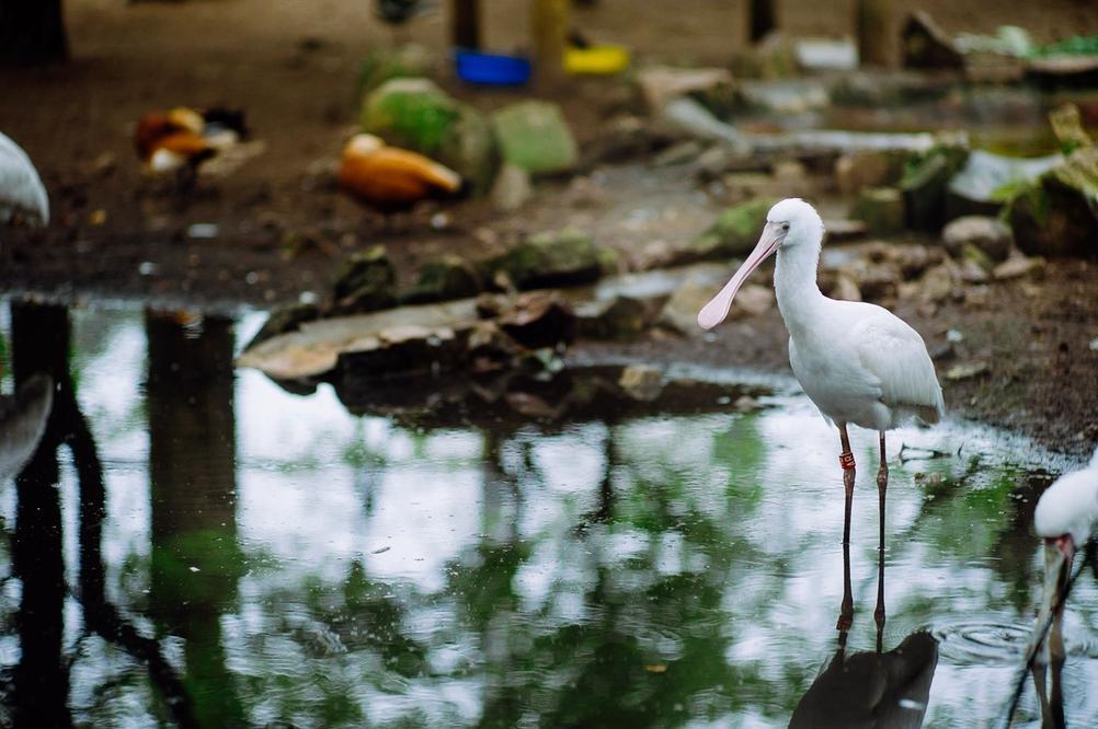 Photo of a bird.