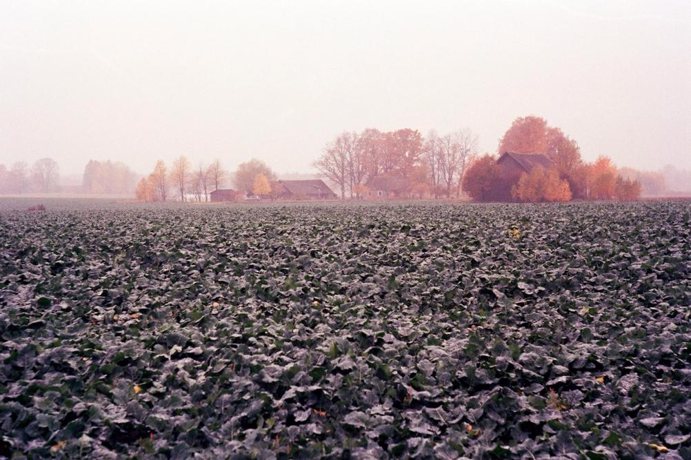 Photo of a field in mist with some houses in the distance.