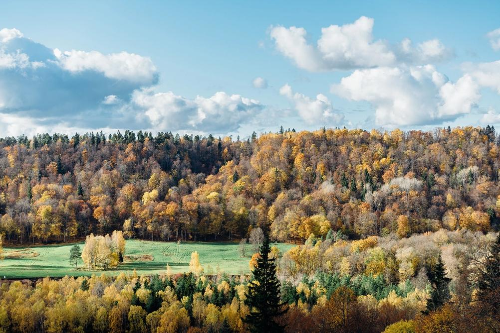 Photo of many trees during autumn.