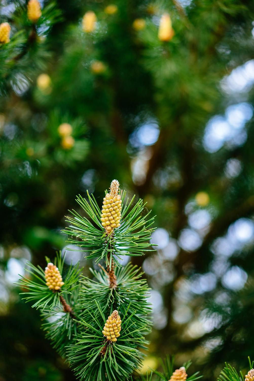 Closeup of a tree.