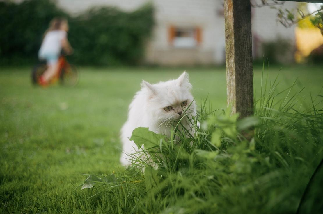 Photo of my can sniffing the grass outside.