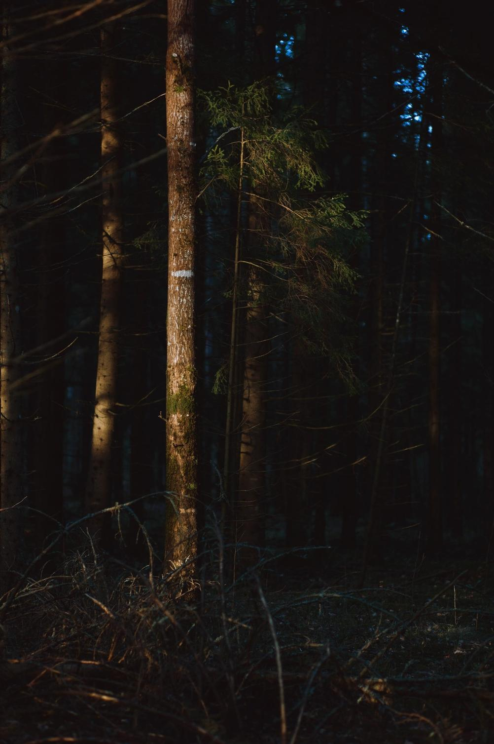 Tree in forest illuminated by sun.