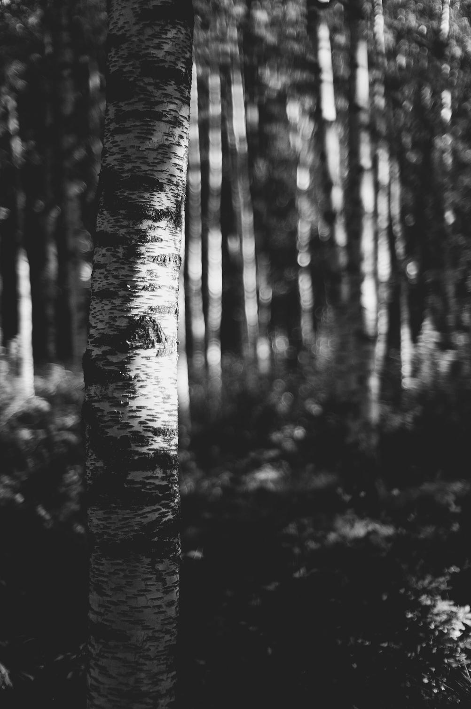 Photo of a tree.