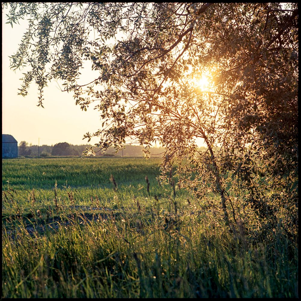 Photo of sun shining through tree branches.