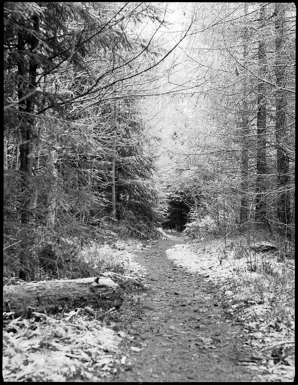 Photo of a forest path.