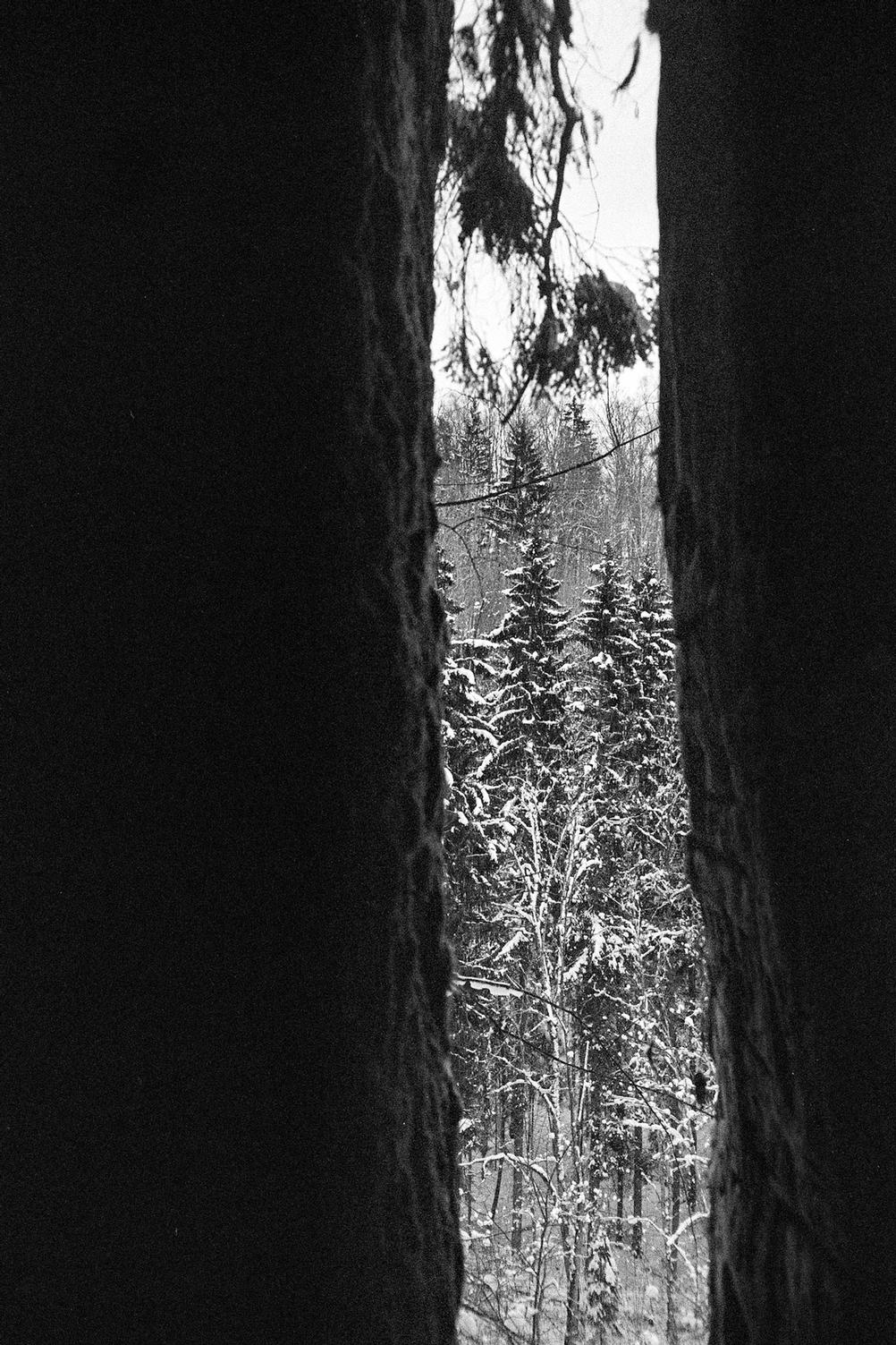 Photo of trees as shot through a cave.