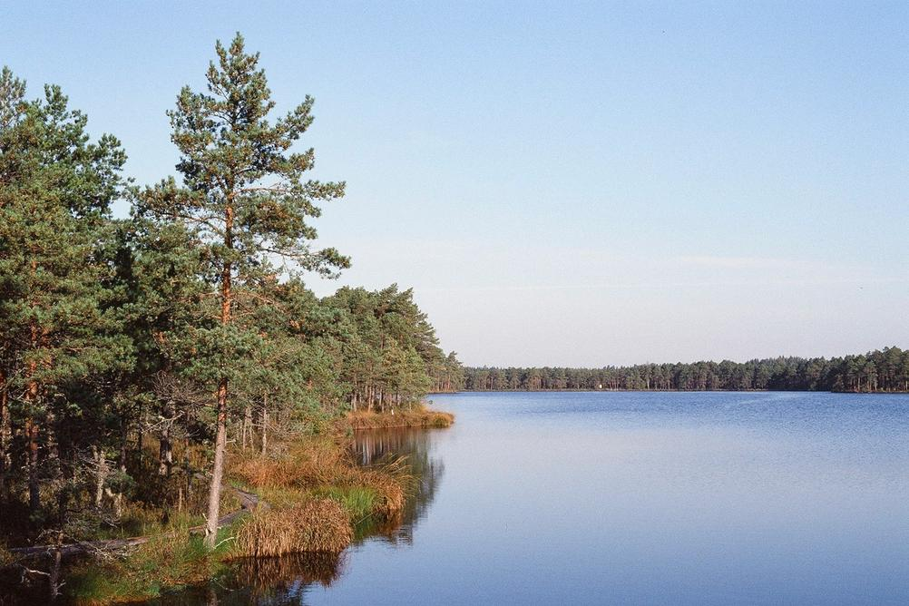 Landscape of lake in the woods.