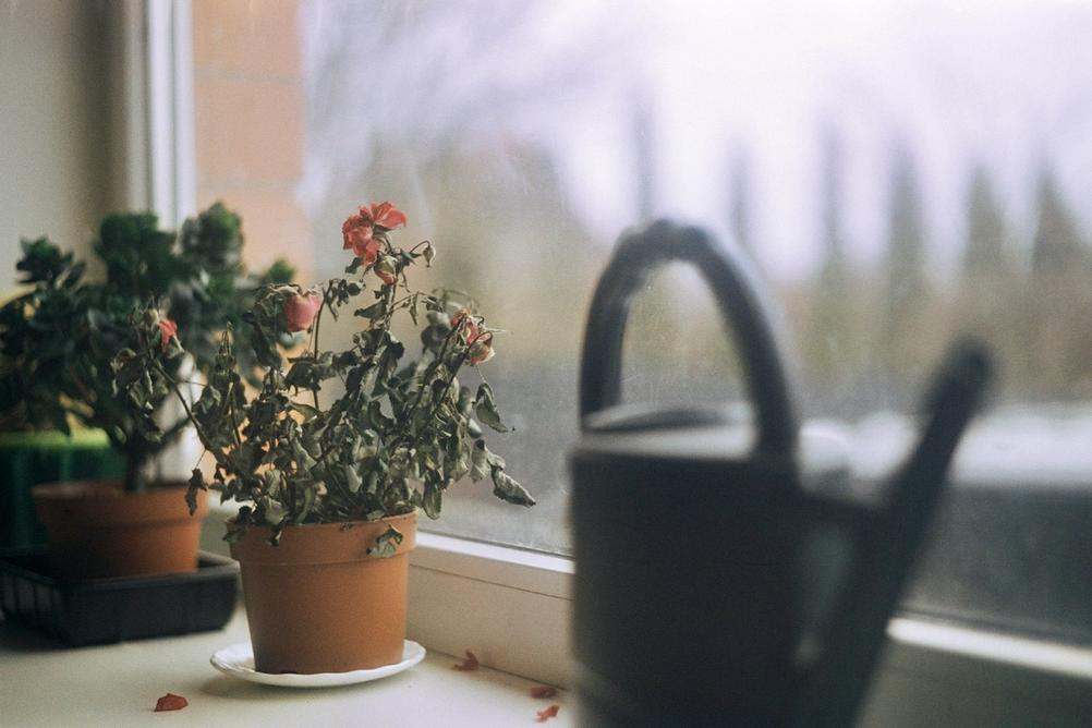 Photo of a dying plant.