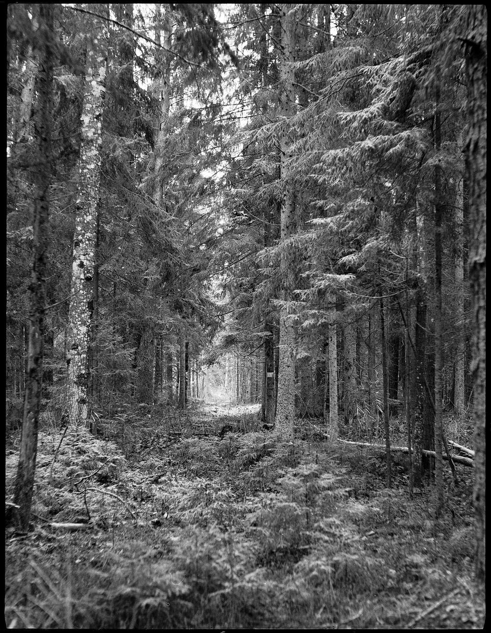 Photo of a forest.