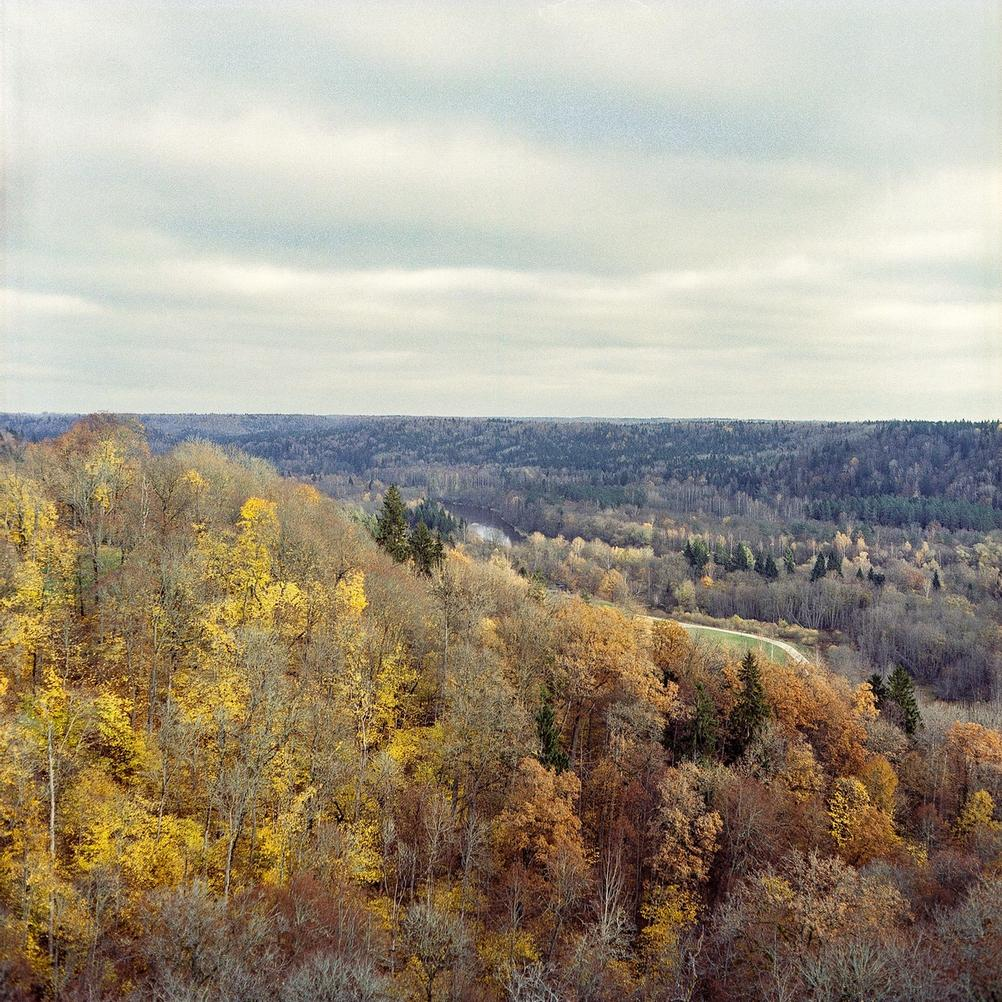 Autumn scene from high above.