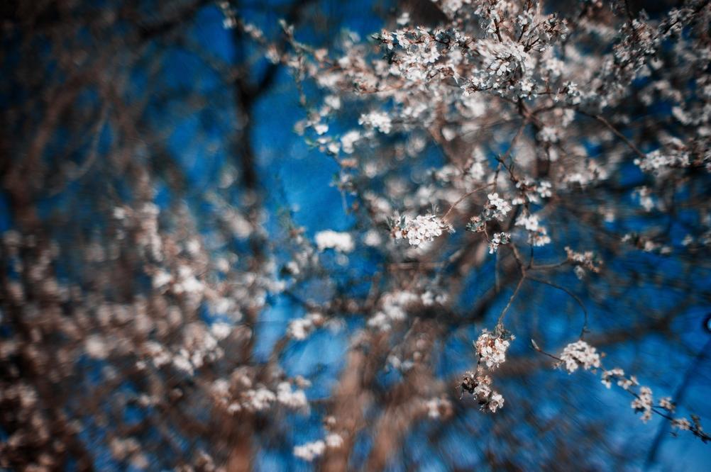 Bokeh photo of flowers.