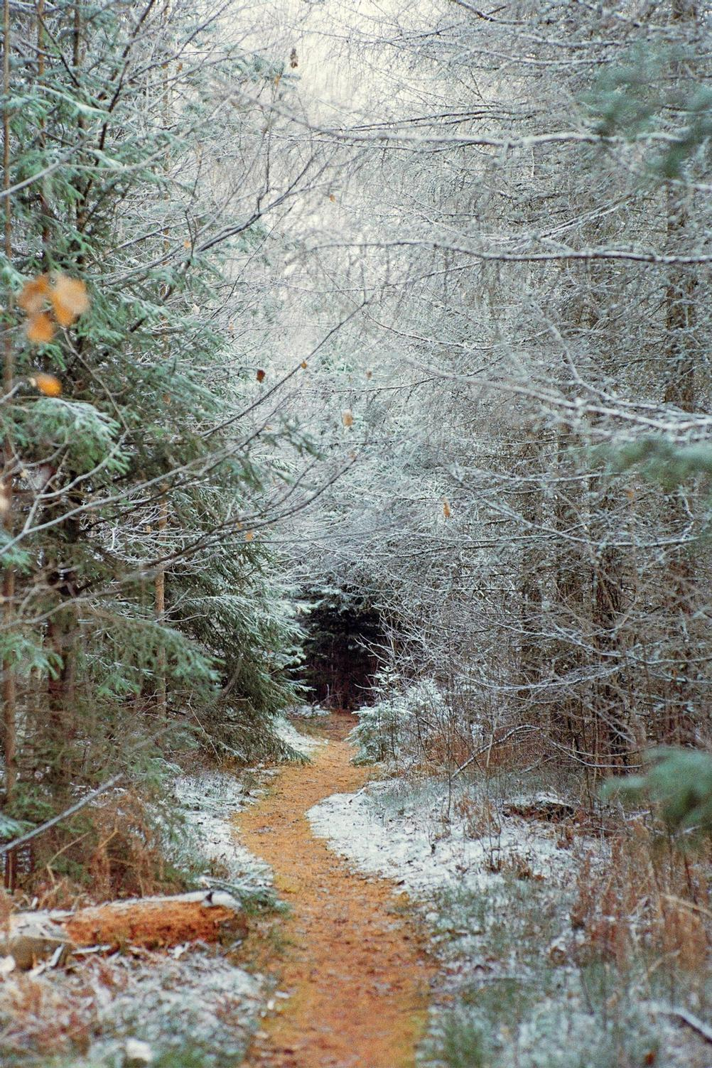 Photo of slightly snowy forest.