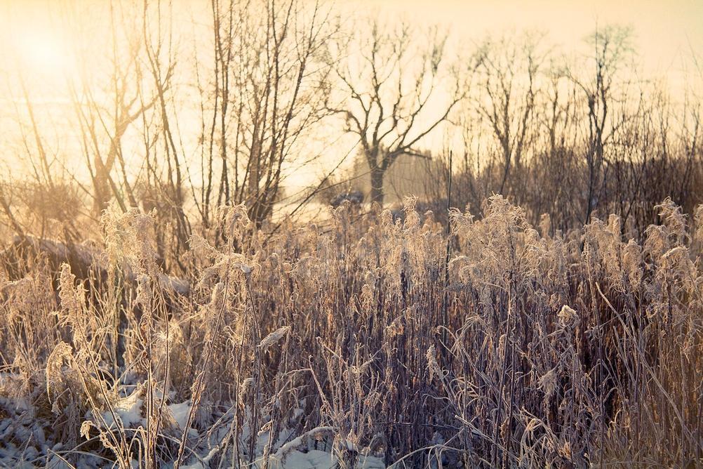 Photo of a field in sunlight.