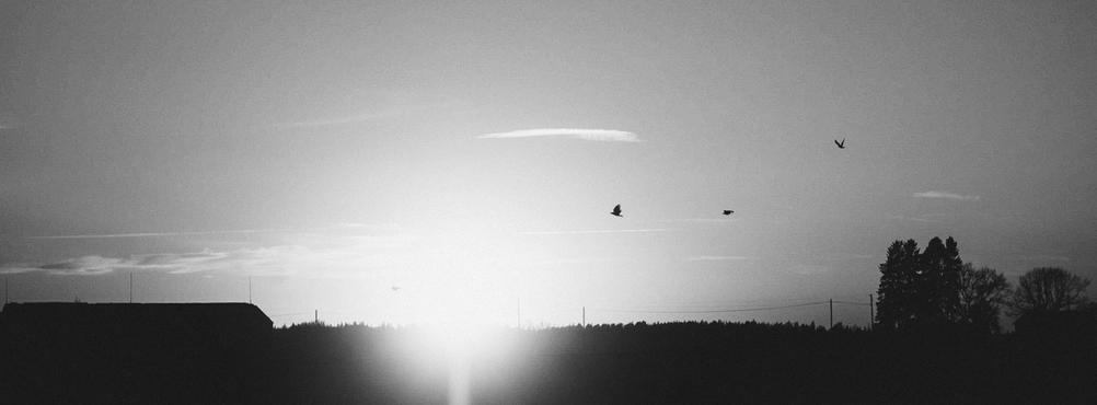 Panoramic photo of sun and some birds.