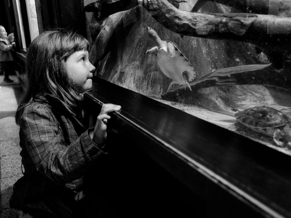 Photo of my daughter looking at a swimming turtle.