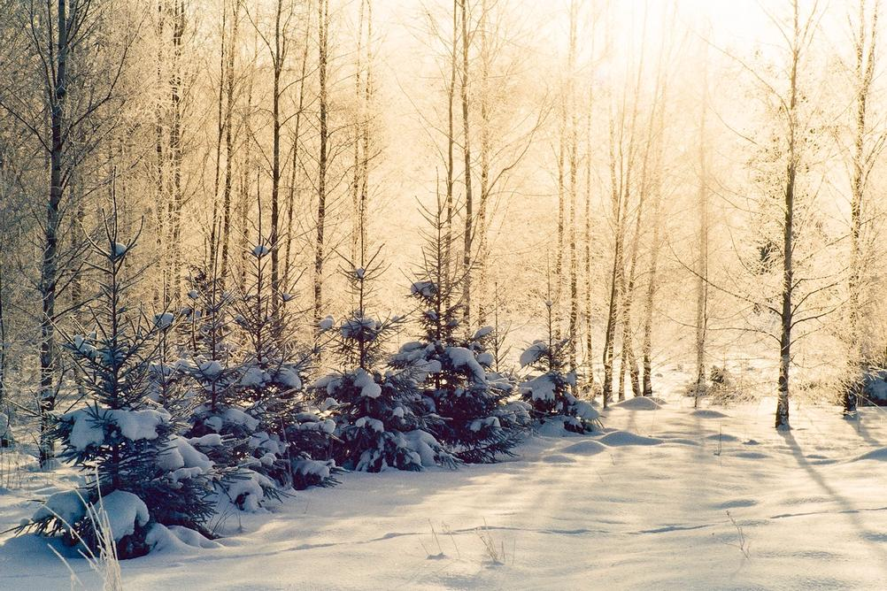 Photo of trees covered in snow and being blasted by sun.
