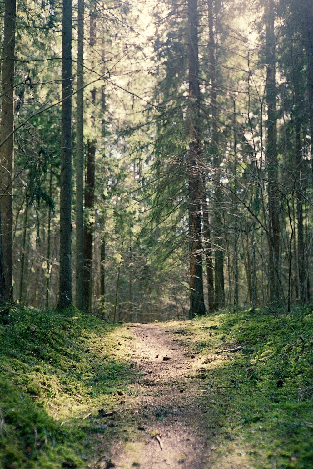 Photo of a path in forest with some sunlight shining on it.