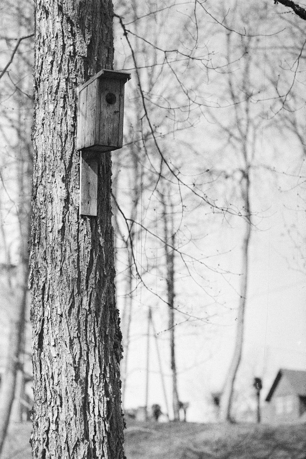 Black and white photo of a bird house on a tree.